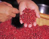 職人の手作業で、小豆を選別しています。